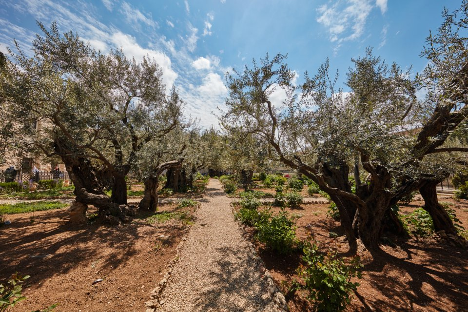 Getsemanská zahrada