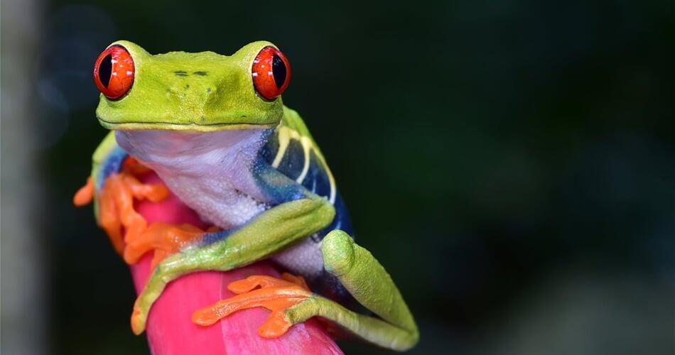 Kostarika s CK Poznání
