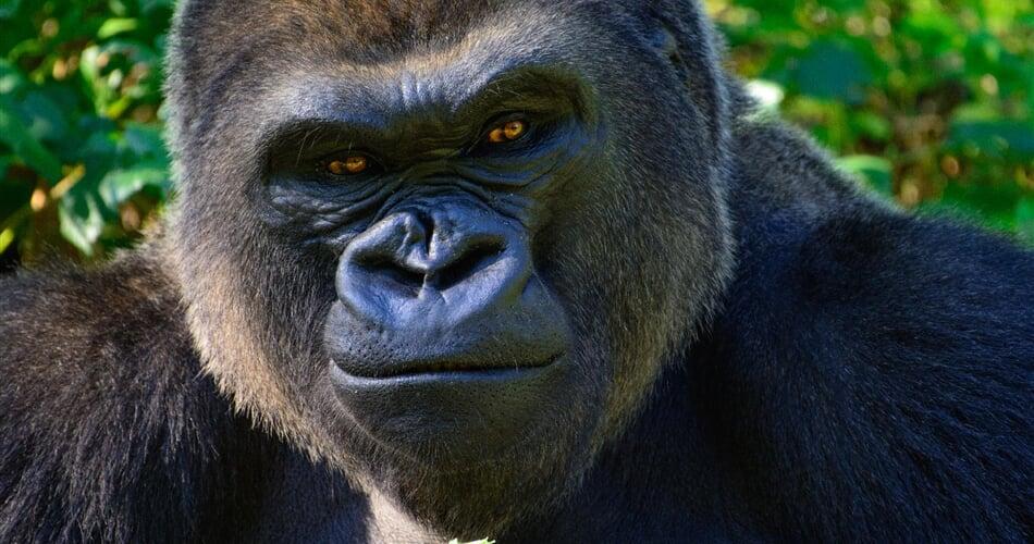 Foto - Uganda - Rwanda